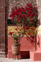 potted red flowering tree