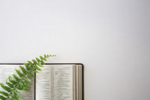 fern on the pages of a Bible