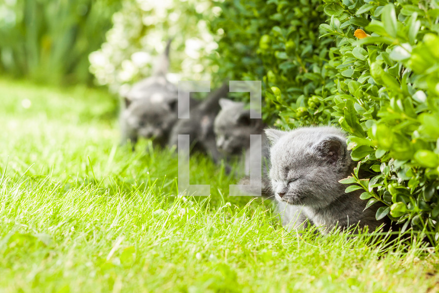 Kittens in the grass.
