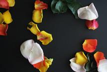 flower petals on a black background