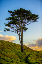 isolated tree on a hillside