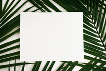white sign on palm frond against a white background
