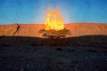 burning bush painting
