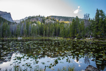 mountain peaks and lily pads in a pond