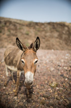 a donkey on gravel