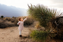 a toddler girl reaching for a cactus