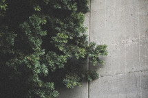 pine and concrete