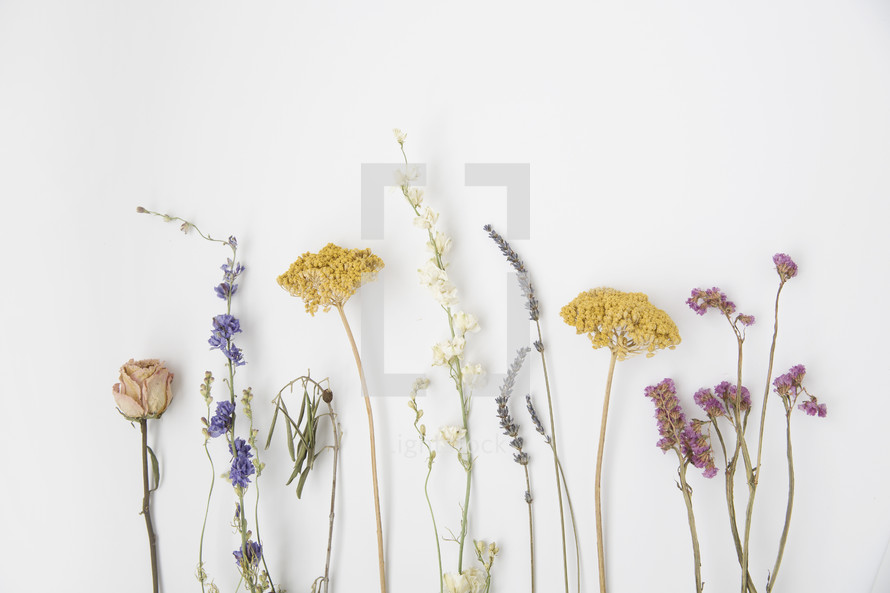 spring wildflowers on a white background