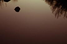 lake water closeup