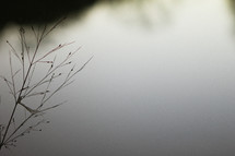 twig, grasses, plant, outdoors