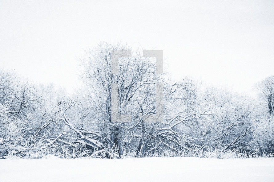 a blue toned photo of snow covered trees