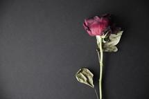 A single long stem red rose.