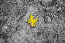 yellow leaf on gray dirt