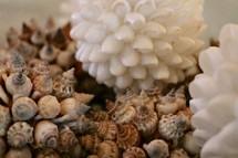 decorative balls of shells