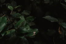 leaves in dark forest