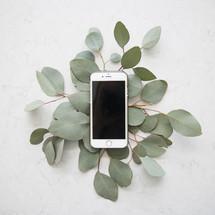smart phone on eucalyptus leaves.