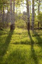 sunlight on the forest floor