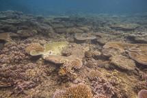 Coral reef in the ocean.
