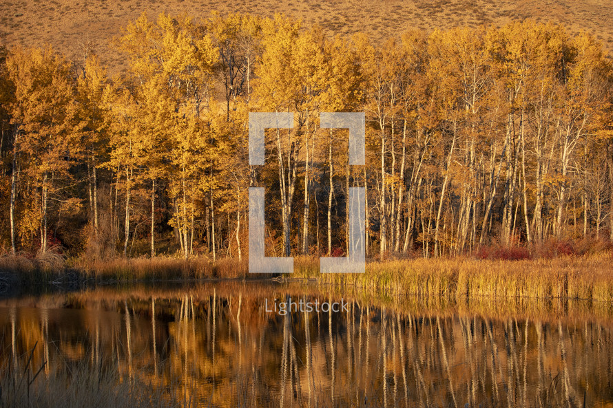 golden forest and lake
