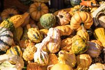 bumpy gourds