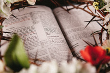 flowers and crown of thorns on the pages of a Bible