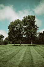 trees at the edge of an open field