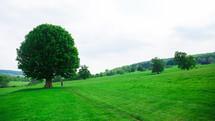 green summer hillside
