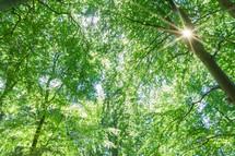 sunburst through branches in a forest