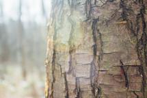 bark on a tree