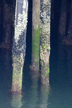 barnacle covered posts in the ocean