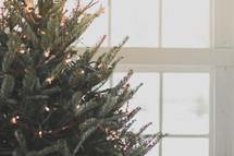 Lights on a Christmas tree by a window