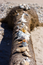 row of seashells