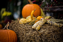 Flint corn, gourds and pumpkins surround a bail of hay backdropped by plants and flowers.