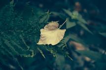 fall leaf on a fern