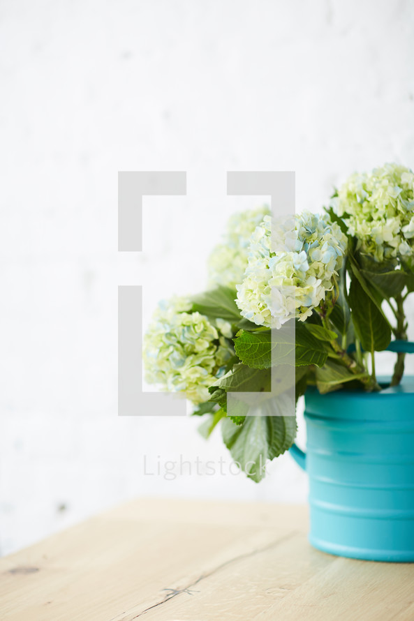 hydrangeas in a teal watering can