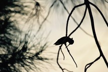 silhouette of a praying hummingbird