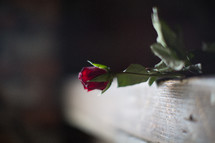 rose on a mantle