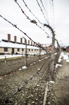 barbed wire fence at Auschwitz