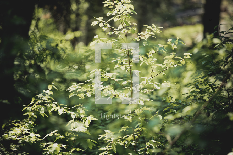 leaves on a bush