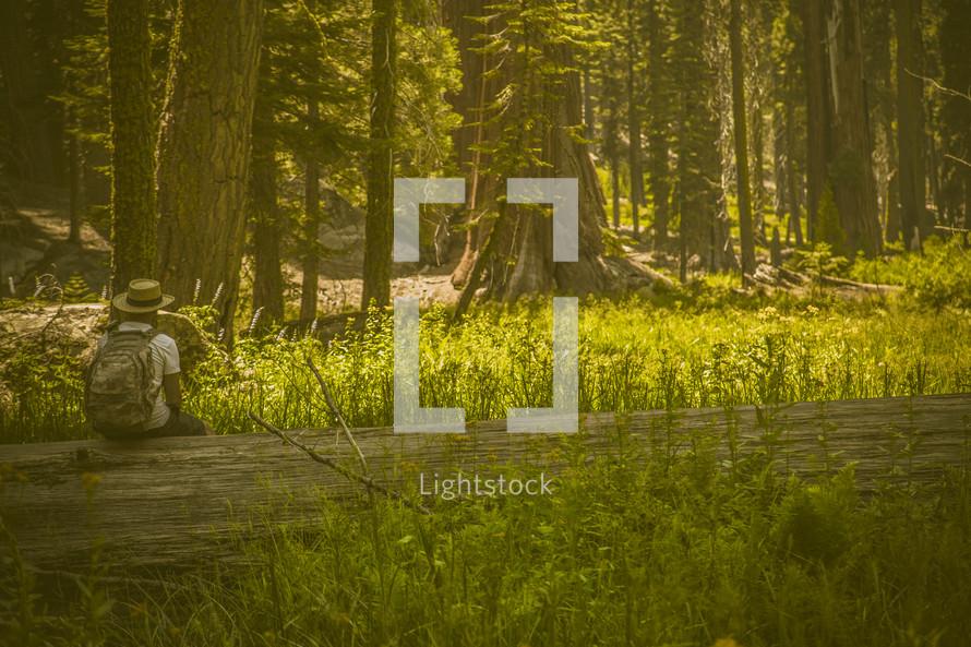 man sitting on a fallen tree in a forest