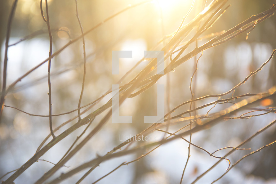 sunlight on branches