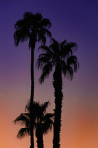palm trees against a purple sky at sunset