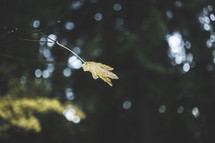 fall leaf in a forest