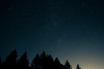 night sky above pine trees