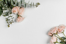 pink roses in the corners on a white background