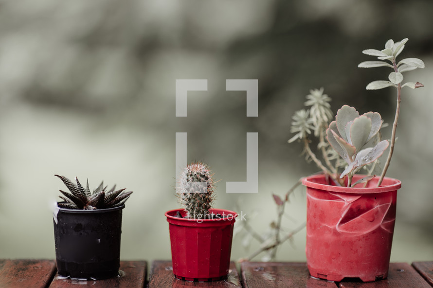potted cactus and succulent plants on a deck