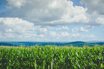 corn fields and mountains