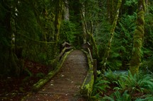 wooden trail through a forest