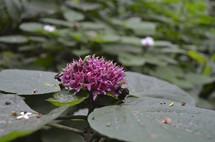 Beautiful, single flower