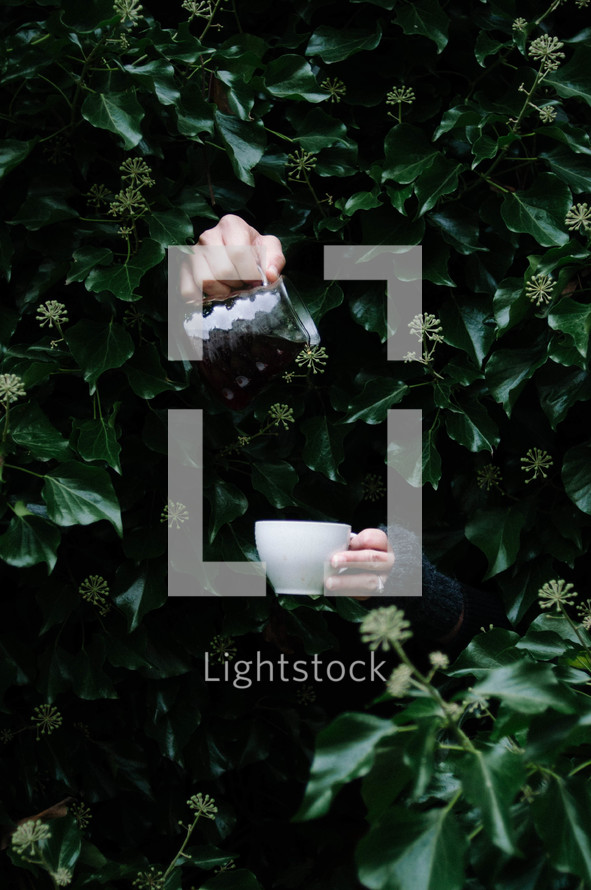 hands through a bush pouring cream into coffee mug